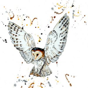 """In Flight"" - Barn Owl in White"" - Original Watercolour - Prints available"