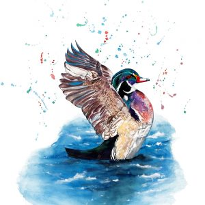 """Wood Duck"" - Original Watercolour"