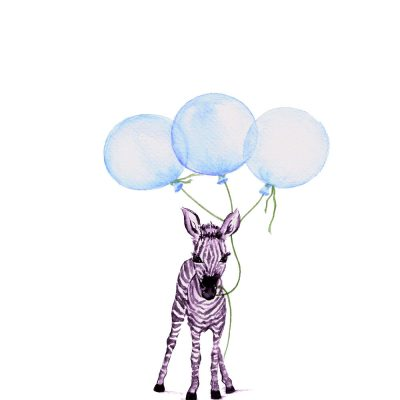 Baby Zebra with Blue Balloons - Prints for sale
