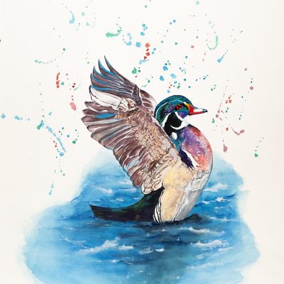 """Wood Duck"" - Original Watercolour"