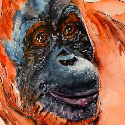 Orangutan - SOLD