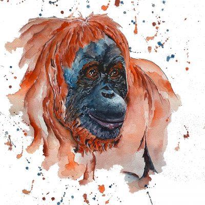 Orangutan - SOLD - Prints available